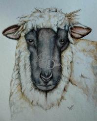 sheepv